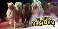 Circus Maximum in Uithoorn
