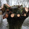 Knotgroep 45 jaar de boom in